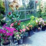 Captura de tela de 2019 05 07 01 19 56 150x150 - Loja de Plantas na Região Oceânica - Loja Perolla Plantas