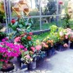 Captura de tela de 2019 05 07 01 20 40 150x150 - Loja de Plantas na Região Oceânica - Loja Perolla Plantas