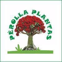 download - Loja de Plantas na Região Oceânica - Loja Perolla Plantas